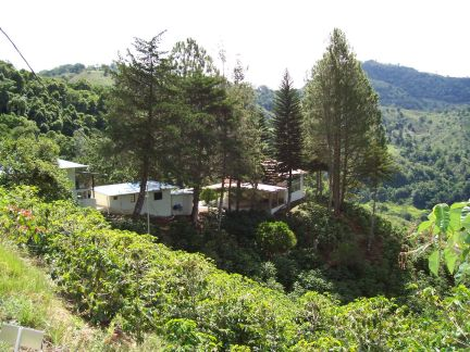 view from hill of house and worker cabins
