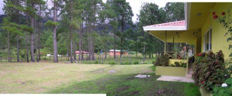 Spacious pine-treed back garden