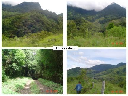 Wildlife galore on 104 mountain acres near Volcan.